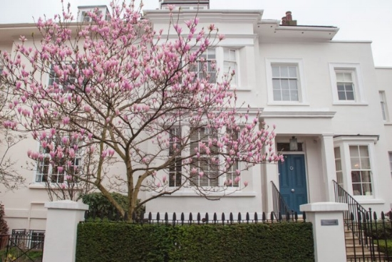 Albert-Place-Kensington-London-Magnolia-Blossom.jpg