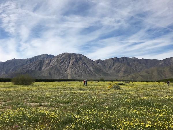 Field of lowers.jpeg