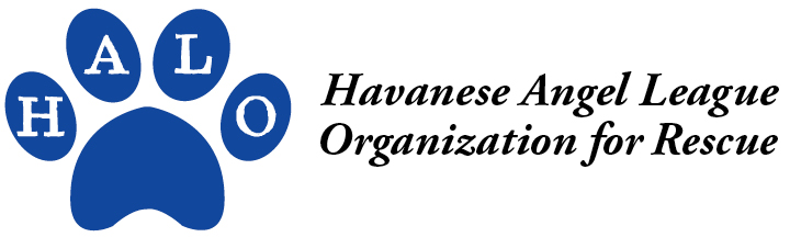 Havanese Angel League Organization
