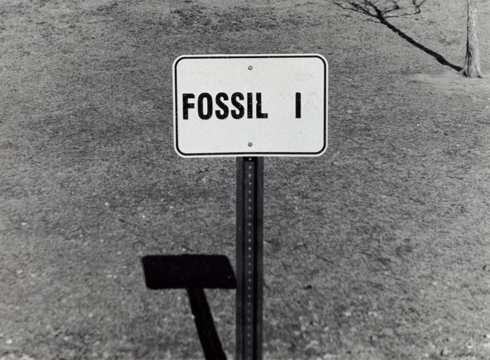 fossil 1.jpeg