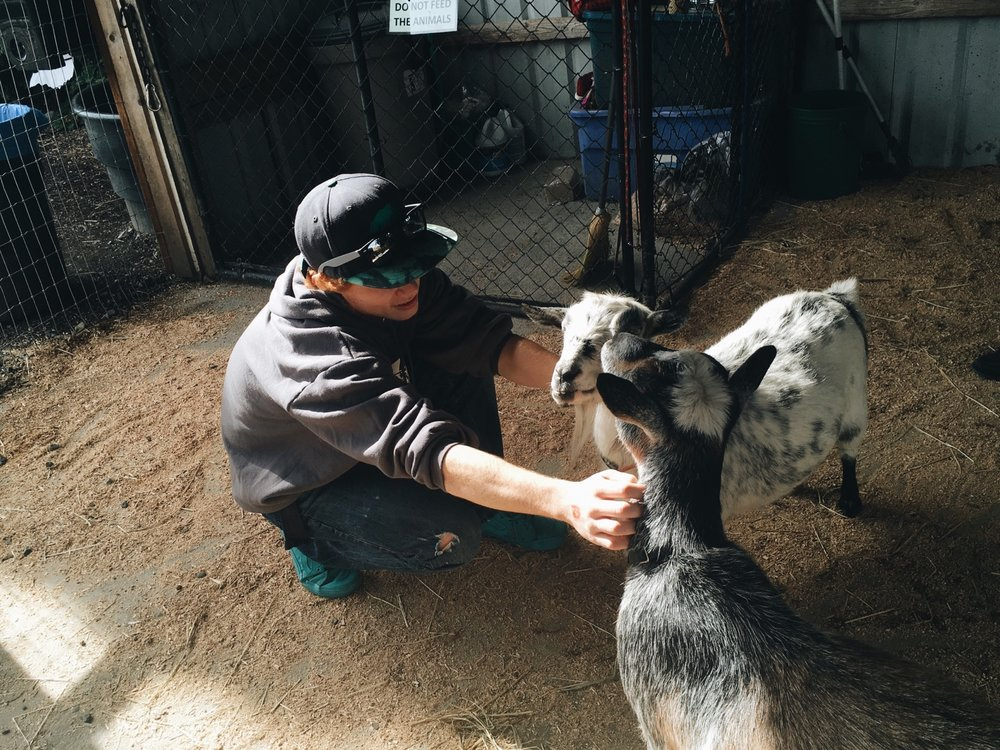 Our very own goat whisperer working his magic.