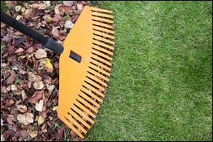 fall-lawn-care-residential