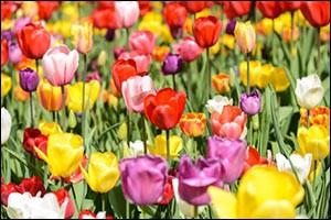prepare-for-spring