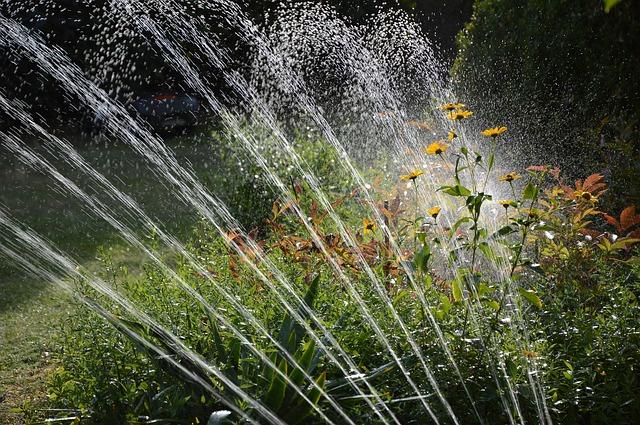 garden-3664278_640.jpg