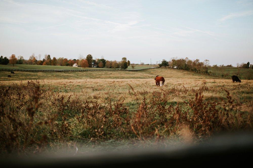 maple-lane-memories-maysville_0003.jpg