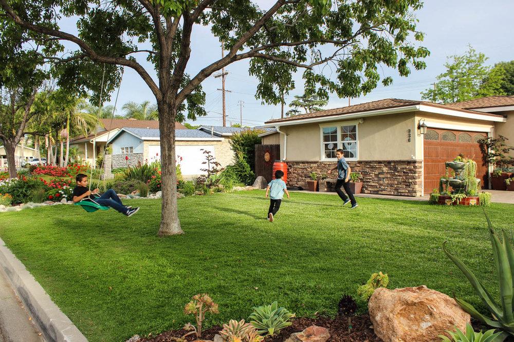 Kurapia Drought Tolerant Lawn