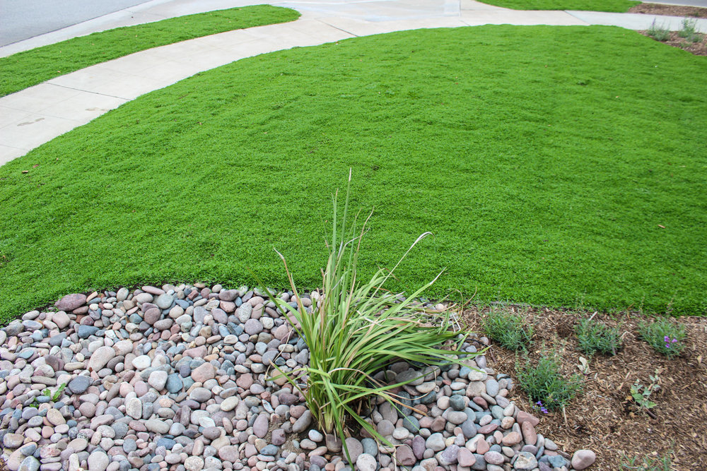 Kurapia Ground Cover Sod