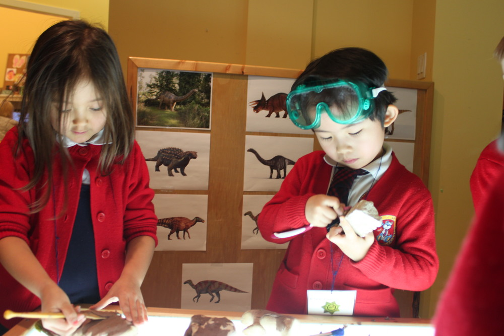 becoming paleontologists and categorizing dinosaur fossils