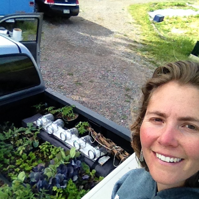 Truck bed filled  with starts for the farmers market.