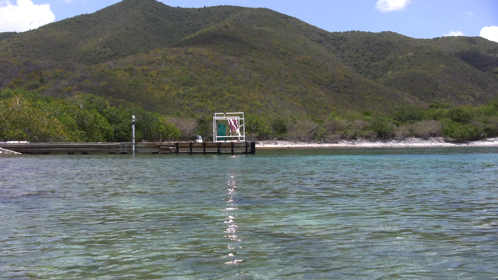 The dock at greater Lameshur Bay