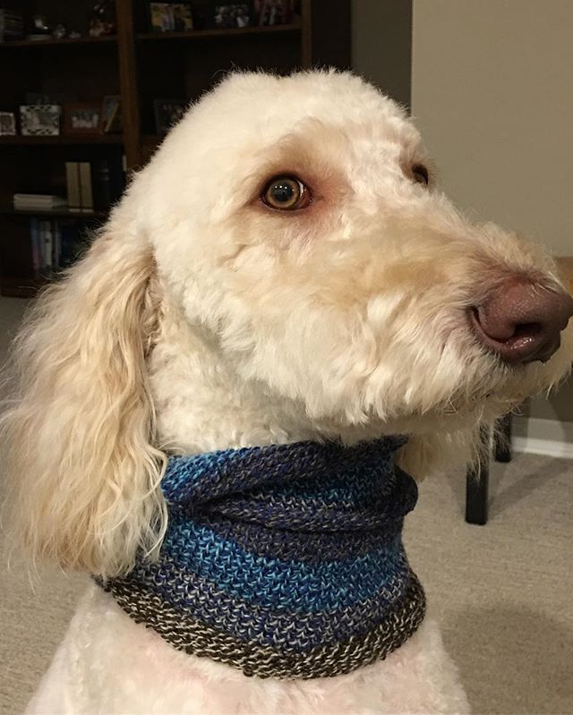 Grove makes a good model - just completed the scarf!