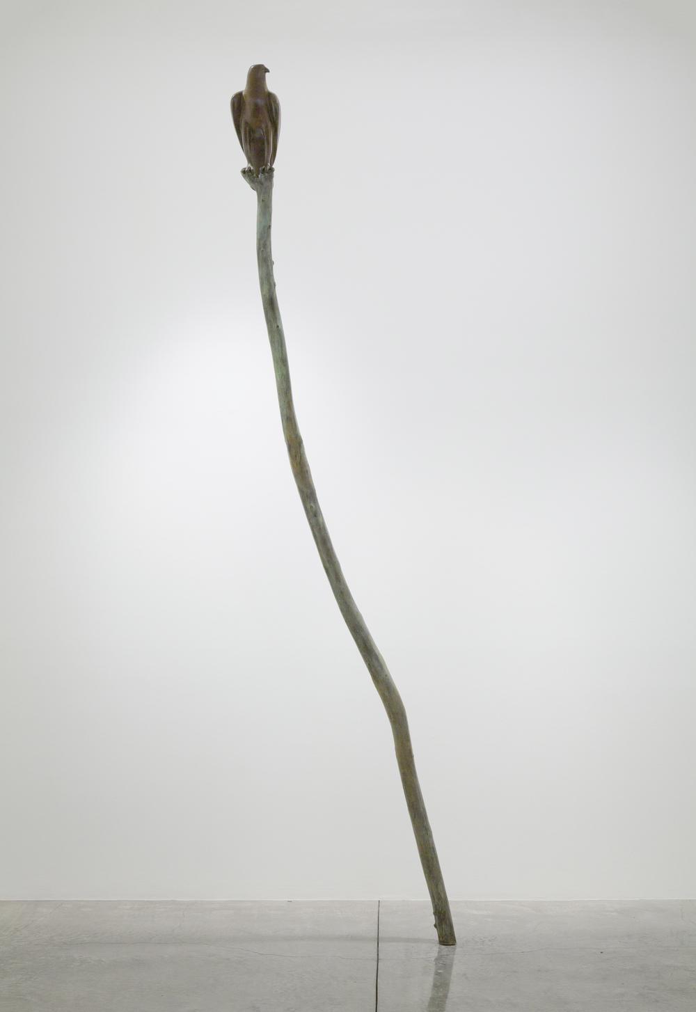 Hawk VI on a Branch