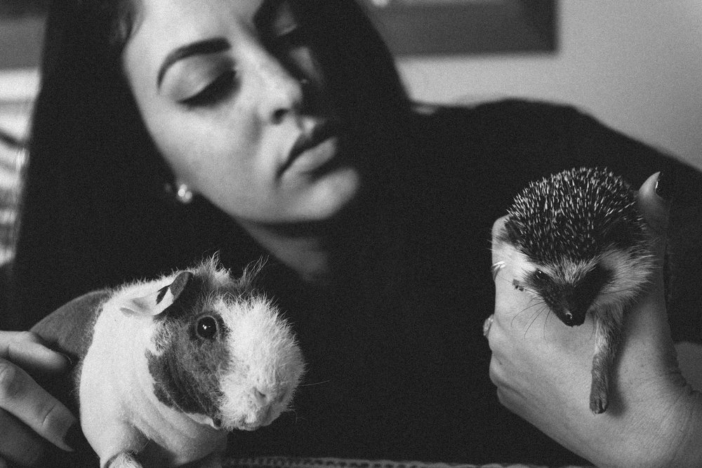 Guinea Pig and Hedgehog