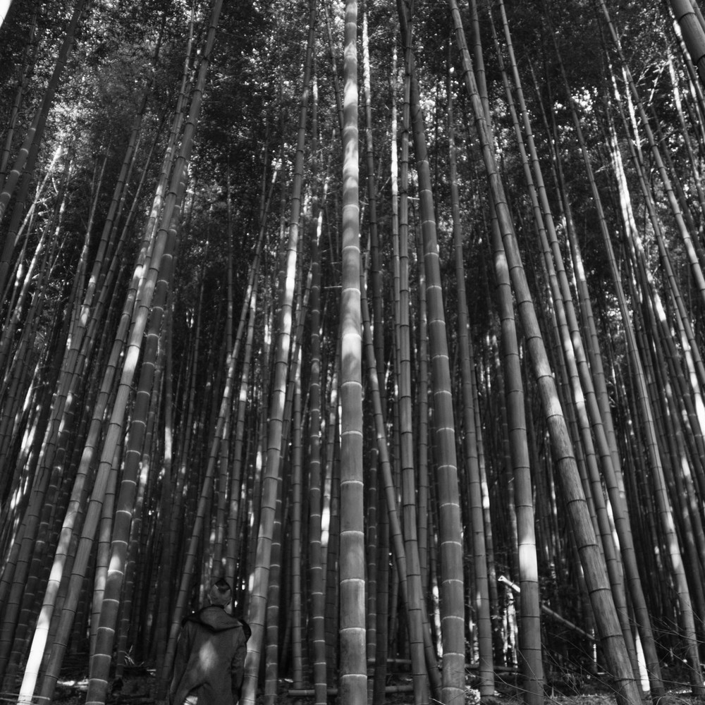 Undisclosed Bamboo Forest