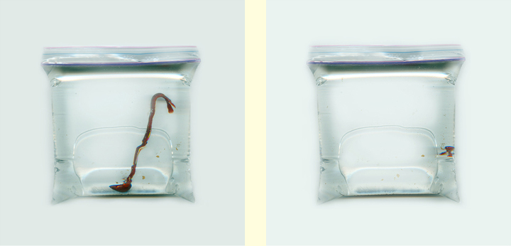"""Beta Scan Diptych; scan of beta fish at 72dpi(l) and 1000 dpi(r); digital photographs; 70""""x35""""; 2015"""