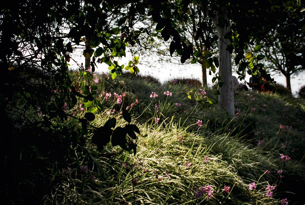 2016-07 Getty Garden.jpg