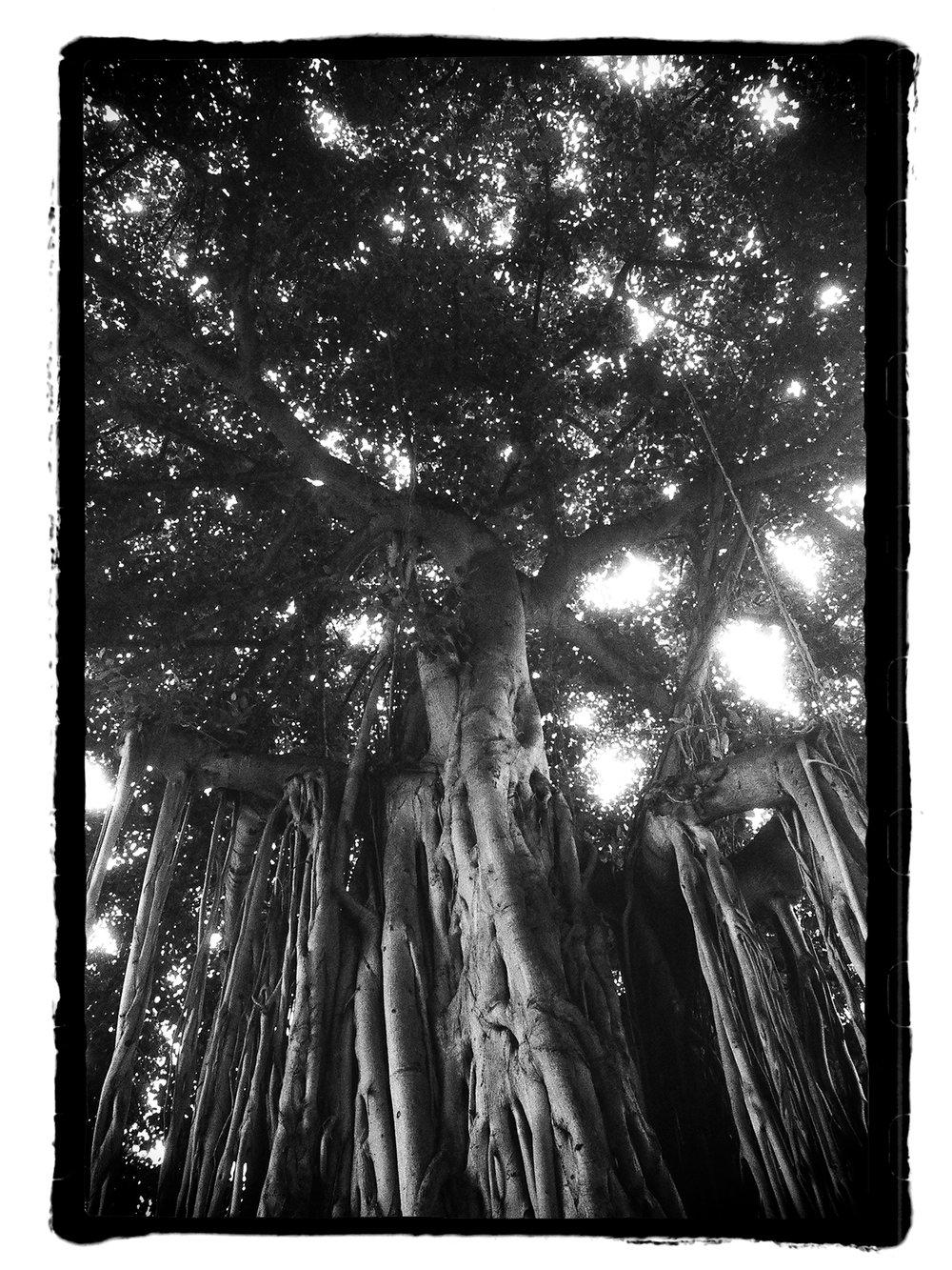 film-banyantree2-border-blog.jpg