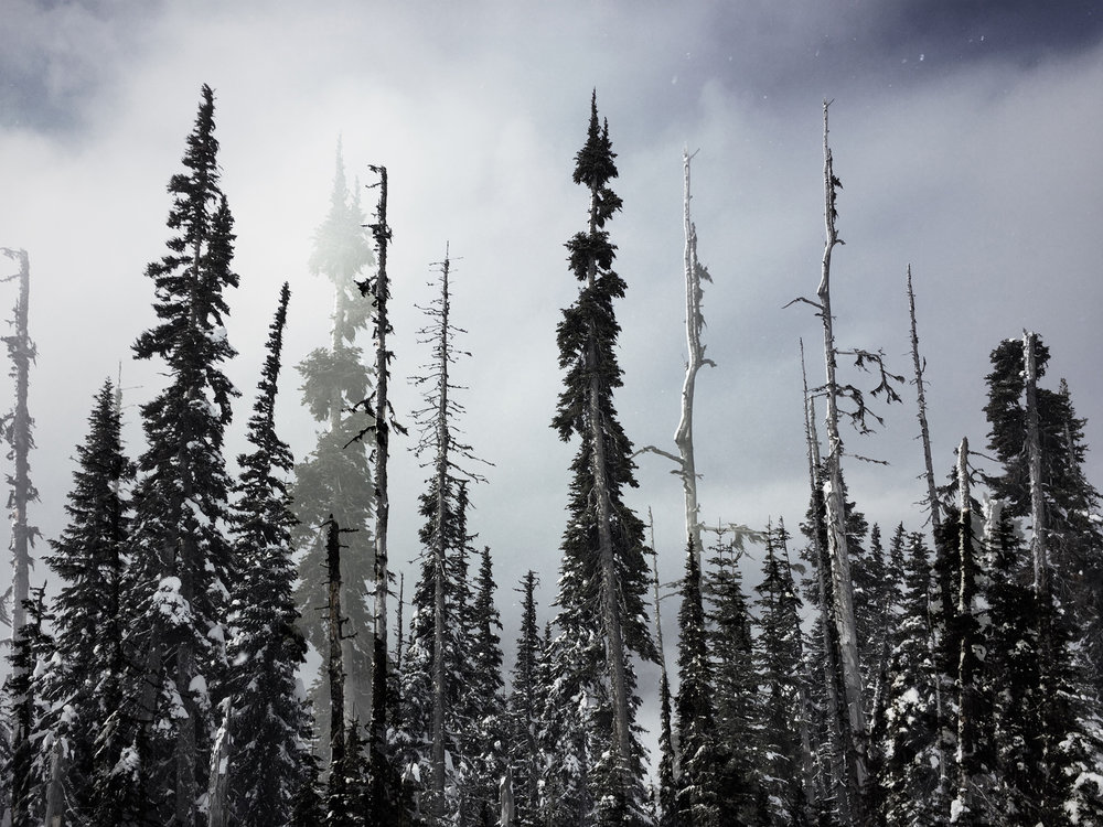 whistler-doubleexpotrees-final.jpg