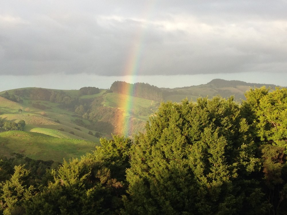 rainbow bush.JPG