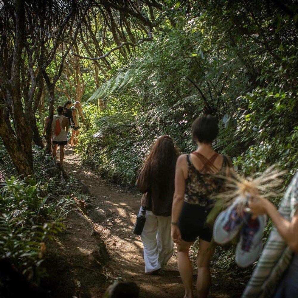bush hike.jpg