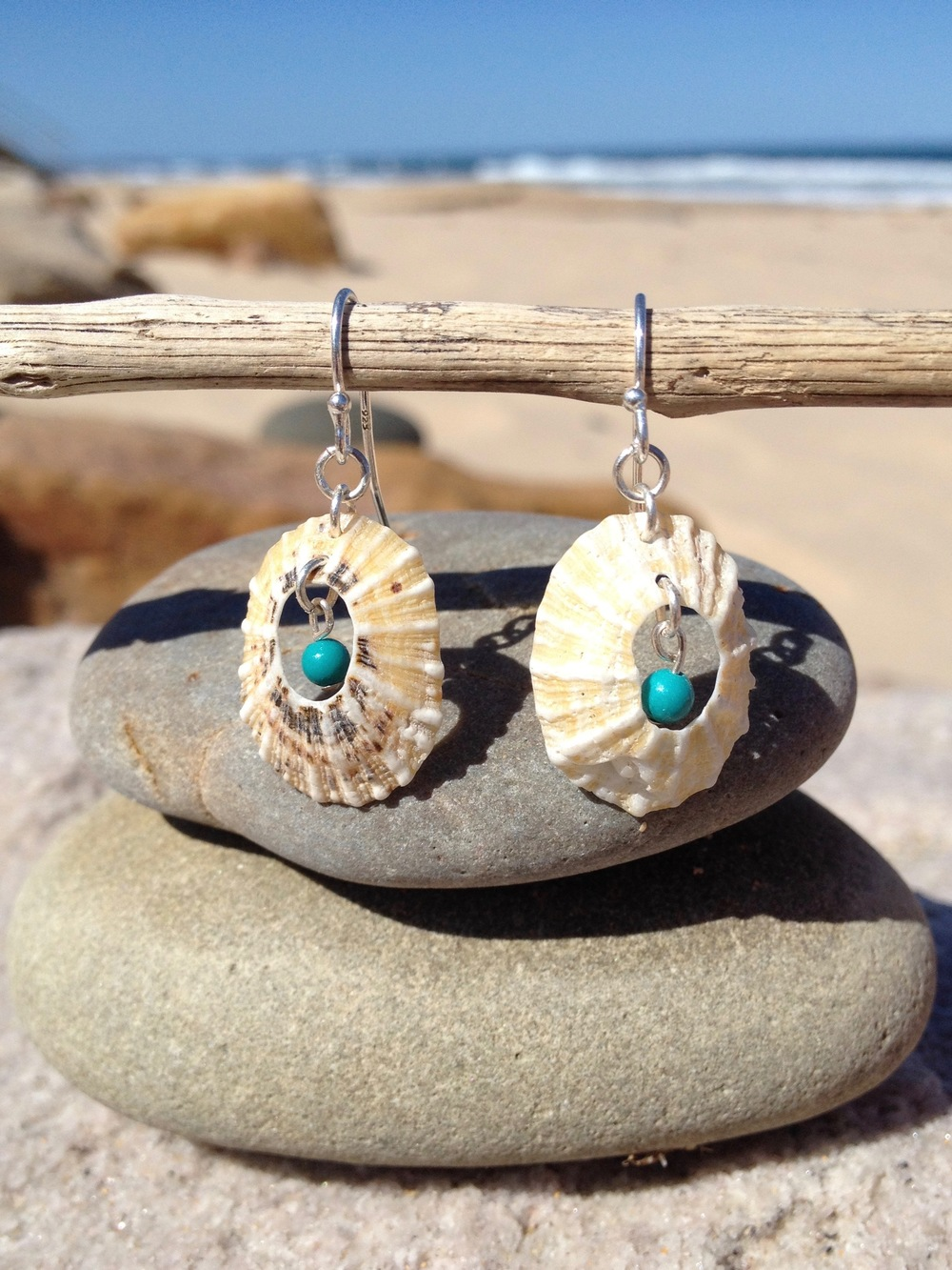 Limpet Shell and Turquoise Earrings