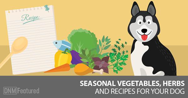 Rita Hogan Spring Herbs For Dogs