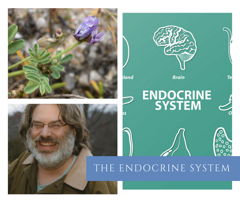 Join Matthew as he discuss the complicated Endocrine System.  This is your opportunity to view the major glands in the body through western herbalism.  You'll walk away with an understanding of the complete system and how it affects the entire body.
