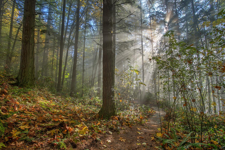 Blog — Little Mountain Park