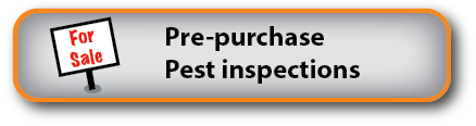 Pre-purchase pest inspections