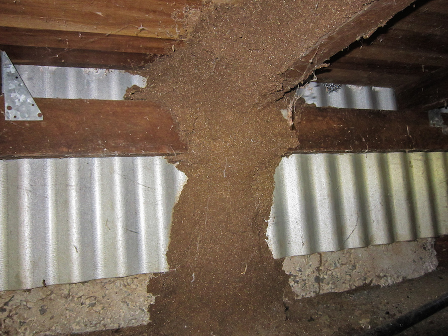 Large termite lead in sub-floor - don't be tempted to break open!