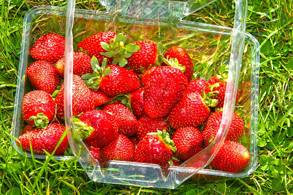 2008-Turners-Berry-Patch-(Fresh-Produce),-Ulverstone,-Rick-E.jpg