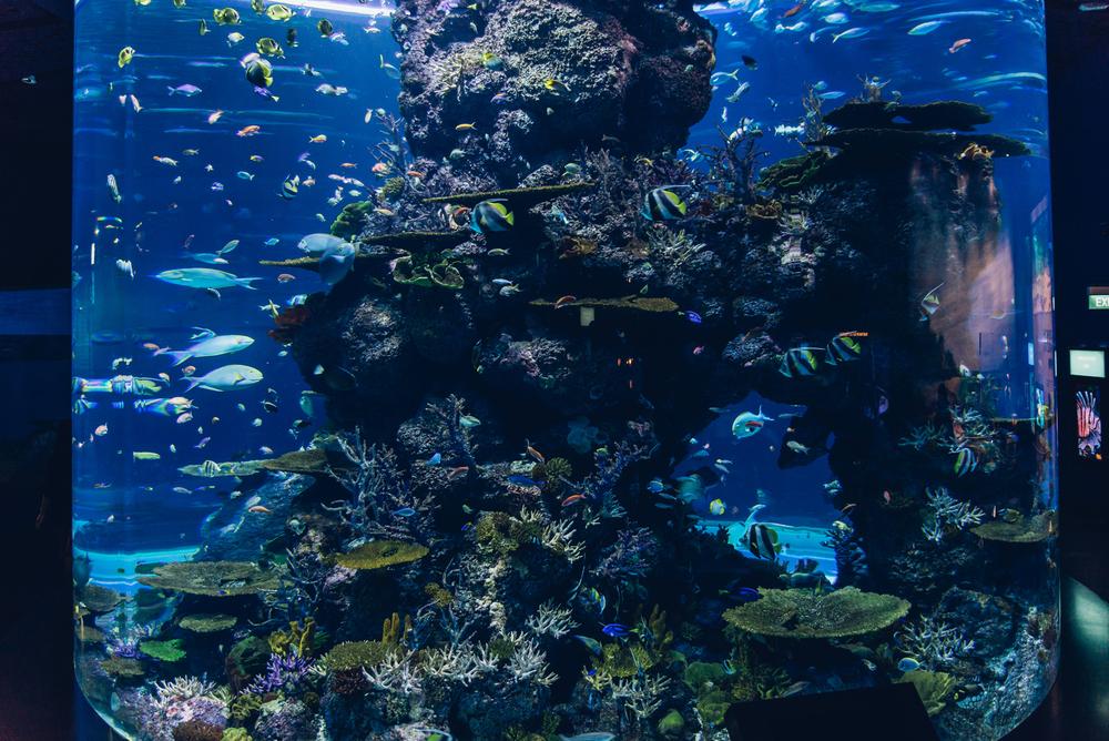 singapore-sea-aquarium-2015-029