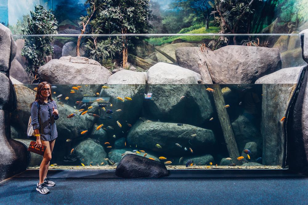 Singapore S.E.A. sea Aquarium