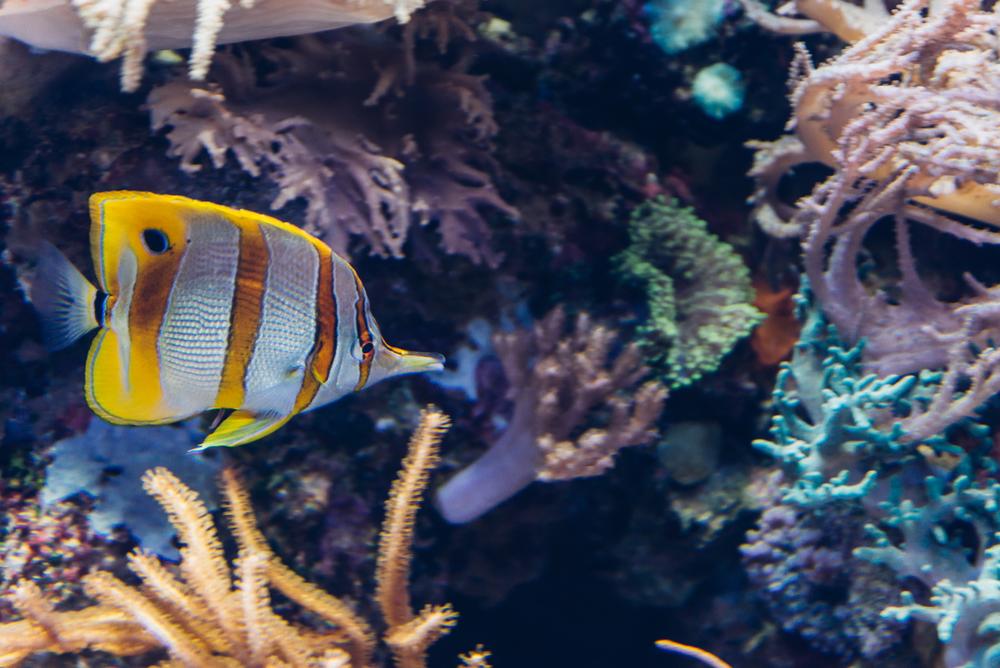 singapore-sea-aquarium-2015-032