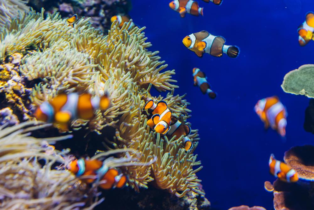 singapore-sea-aquarium-2015-038