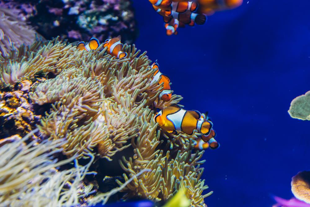 singapore-sea-aquarium-2015-039