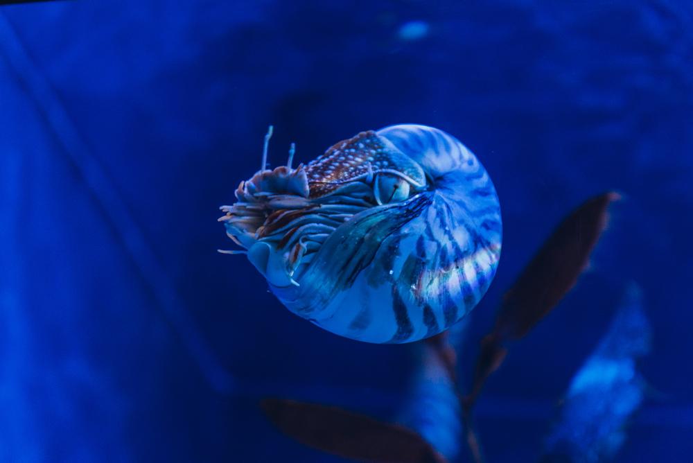singapore-sea-aquarium-2015-065
