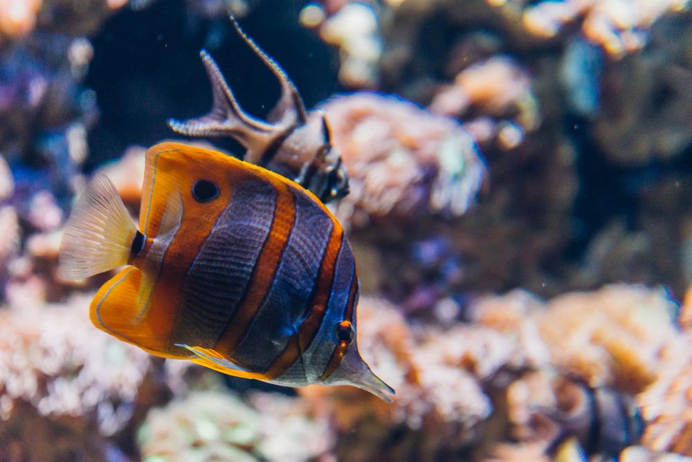 singapore-sea-aquarium-2015-066