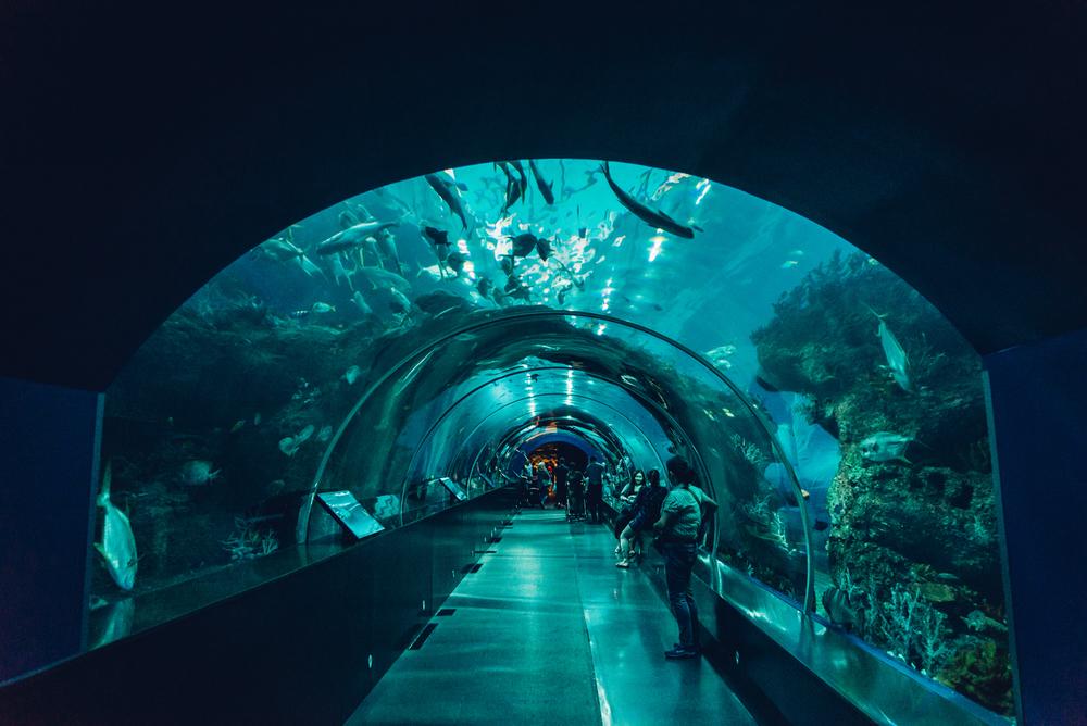singapore-sea-aquarium-2015-067