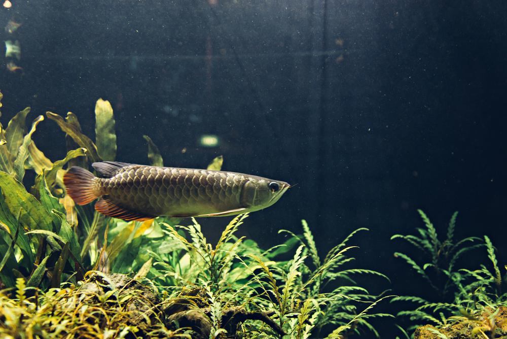 singapore-sea-aquarium-2015-070