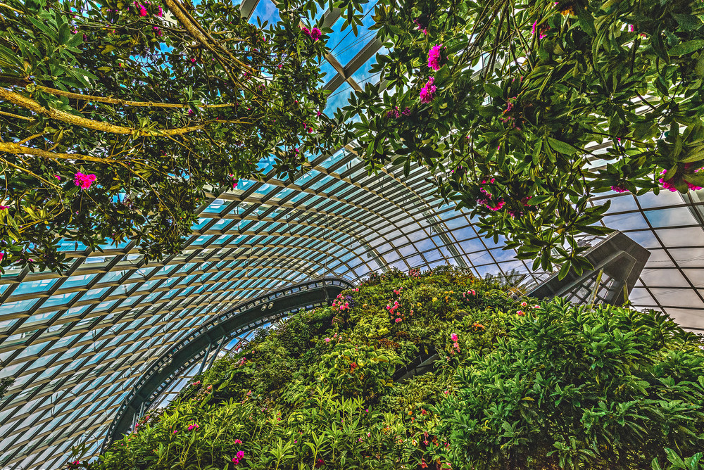 Singapore Gardens by the Bay Cloud Forest Travel Photography