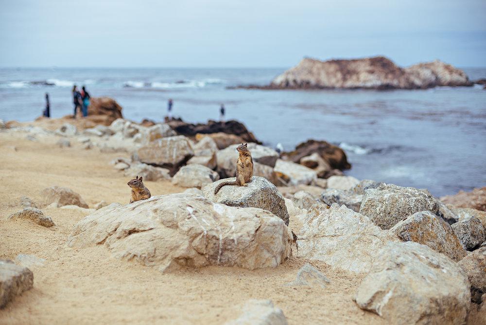 Bird Rock 17-Mile Drive Pebble Beach Pacific Grove Monterey California Vacation Photography 2016