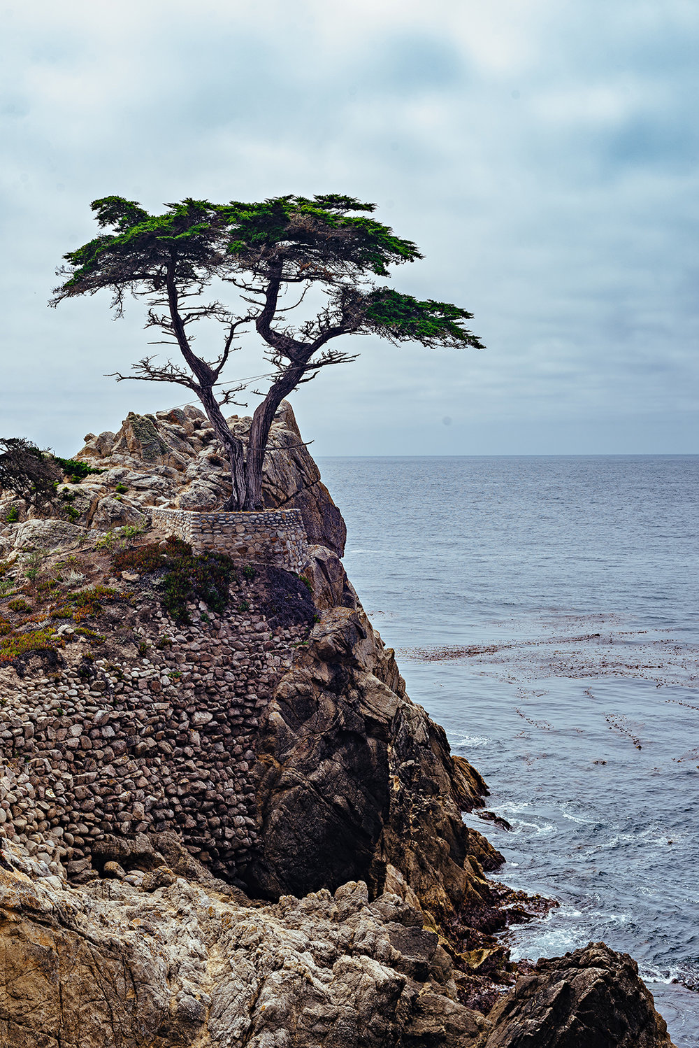 Lone Cypress 17-Mile Drive Pebble Beach Pacific Grove Monterey California Vacation Photography 2016