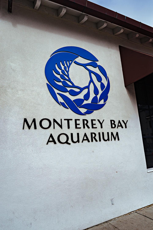 Monterey Bay Aquarium California Photography Vacation 2016