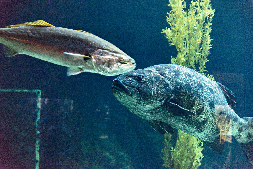 Monterey Bay Aquarium Cannery Row California Photography Vacation 2016
