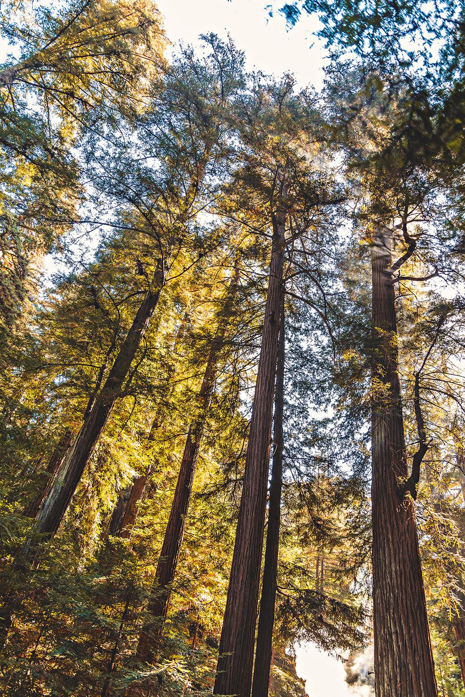 Roaring Camp & Big Trees Felton California Redwood Vacation Photography