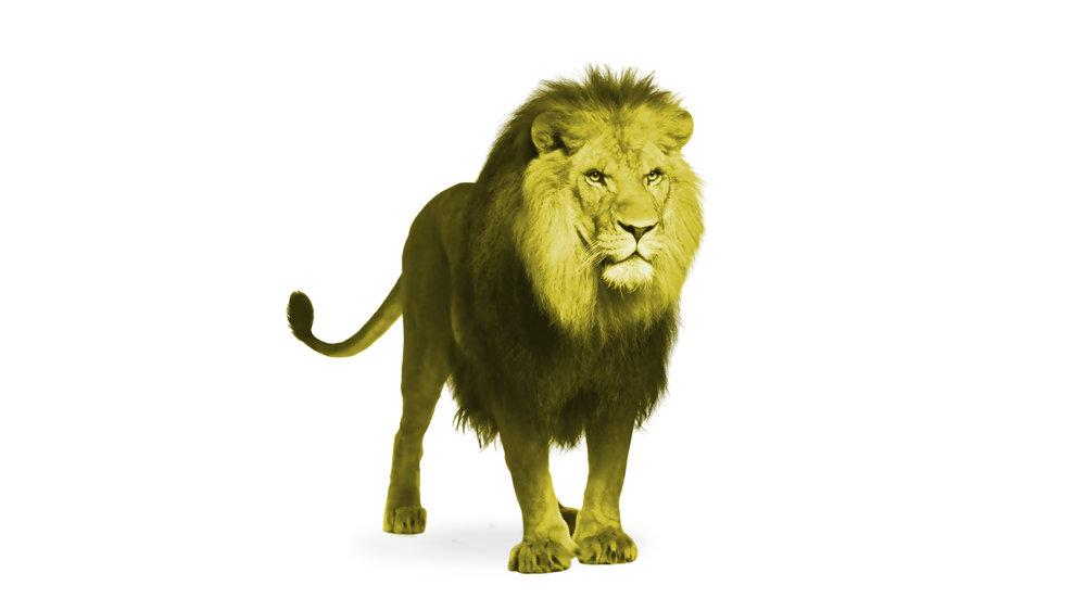 Lion .jpg