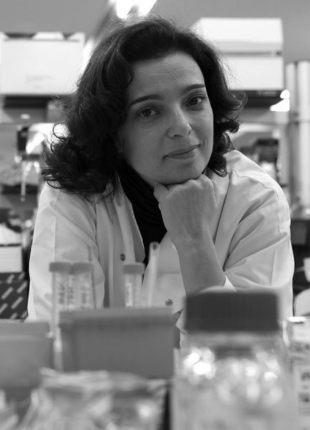 Maria Mota - Director at Instituto de Medicina Molecular