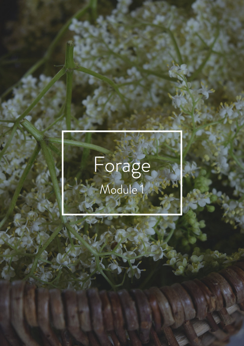 Forage Module title page.jpg