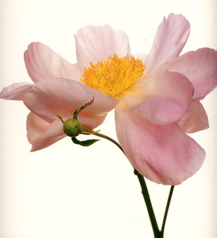 8 easy ways to make cut flowers last longer luna flower co - Ways to make your flowers last longer ...